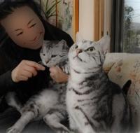小山実稚恵と猫の画像