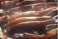 イカが最近高い理由はなぜ?世界的に不漁?2017年